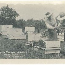 Image of Working in the Bee Garden, North Family Shakers, Mount Lebanon, NY - Mount Lebanon, NY