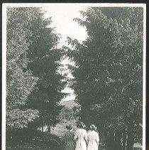Image of A Shaded Walk, Shakers, Mt. Lebanon, N.Y. - Mount Lebanon, NY