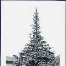 Image of [North Family Shed and Shop] - Mount Lebanon, NY
