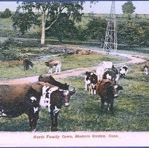 Image of North Family Cows, Shakers Station, Conn. - Enfield, CT