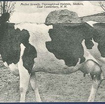 Image of Perfect Seventh, Thoroughbred Holstein, Shakers, East Canterbury, N.H. - Canterbury, NH