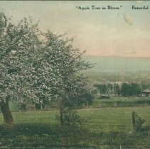 Image of Apple Tree in Bloom