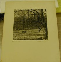 Image of Print, Photographic - On the Alert