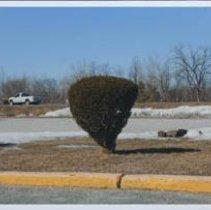 Image of Print, Photographic - Bushes of Bennington County