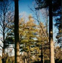 Image of Parks and Municipal Land - 2005.570.0126