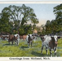 Image of Other - Greetings from Midland