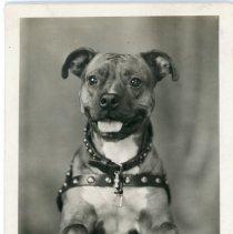 Image of Others - Dog Portrait