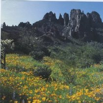 Image of Handbill - Advertisement for Sun City West titled - After you see our desert bloom, see a place where people do.