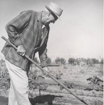 Image of Stewart Cotter raking garden plot - Black and white photo that appeared in the Arizona Republic on November 34, 1967 Green Thumber - Stewart Cotter, formerly of Madison, WI, found gardening in Arizona much different than in his home state.  Irrigation was a completely new gardening practice to him.