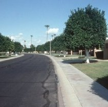 Image of Typical 1960's Sun City street view - Typical 1960's Sun City depicting serpentine street planning and palms.  Slide from Phoenix Art Museum.