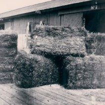 Image of Five marsh grass bales next to shed - Print, Photographic