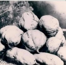 Image of 13 sweet potatoes