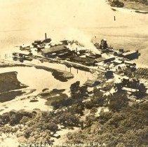 Image of Fernandina Pogie Plant Postcard - Print, Photographic