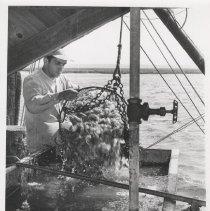 Image of Washing shrimp - Print, Photographic