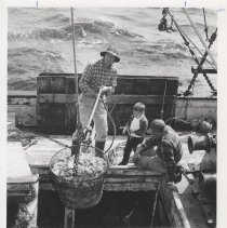 Image of Unloading shrimp - Print, Photographic