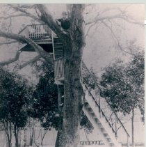 "Image of ""Buzzard Roost"" in backyard of Swann home - Print, Photographic"