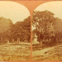 "Image of Stereoview: ""Borel"" at St. Mary's Ga. - Stereoview"