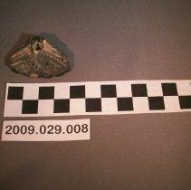 Image of Fish vertebra - Fossil