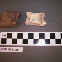 Image of Deer Ankle Bones - Fossil