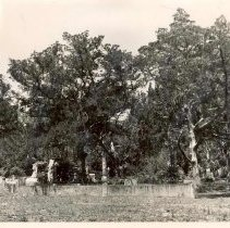Image of Bosque Bello Cemetery - Print, Photographic