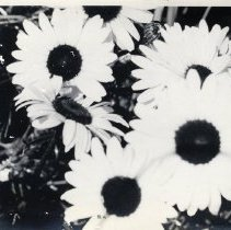 Image of Flowers - Print, Photographic