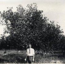 Image of Citrus tree and Arthur Steil        - Print, Photographic