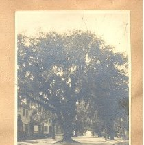 Image of Live Oak 7th and Ash Street