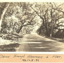 Image of Drive through Hammock to Fort Clinch - Postcard