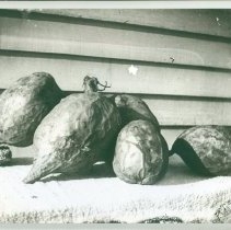 Image of Five artistic sweet potatoes - Print, Photographic