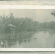Image of Scene on Withlacoochee River - Print, Photographic