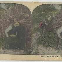 Image of Storing watermelons - Stereograph