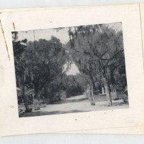 Image of Bosque Bello - Print, Photographic