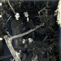 Image of Group of tree climbing Cub Scouts - Print, Photographic