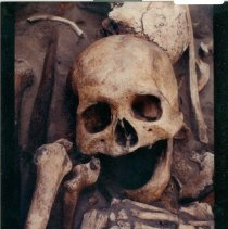 Image of Color print of skull and bones uncovered at Dorion archeological dig. - Print, Photographic