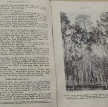 "Image of ""Slash Pine"" Farmers Bulletin #1256"