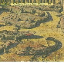 "Image of A postcard titled: "" An Alligator farm in Sunny Florida """