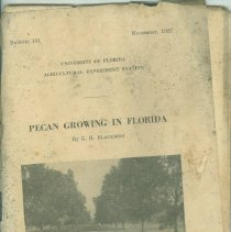 "Image of University of Florida, Agricultural Experiment Station, Bulletin 191, November 1927, ""Pecan Growing in Florida"" by G. H. Blackmon - Bulletin"