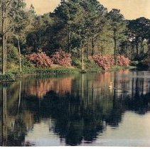 Image of Bellingrath Gardens - Print, Photographic