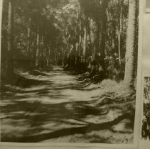 Image of Road to Fort George