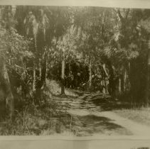 Image of Road to Fort George Island