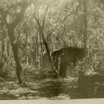 Image of Tabby Houses Slave Quarters at Kingsley Plantation