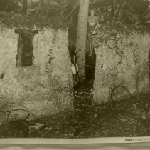 Image of Palmtree growing out of slave house