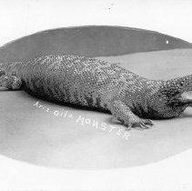 Image of Arizona Gila Monster.  Black and white photographic postcard of a Gila monster.  Oval image on a white background. Maker's Mark: Jonathan R. Williams, Safford, Arizona - Postcard