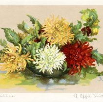 "Image of ""Dahlias,"" by G. Effie Smith"