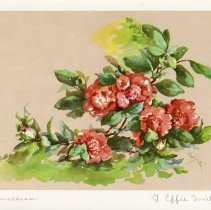 """Image of """"Carnellias"""" by G. Effie Smith"""