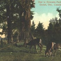 Image of Deer Grazing in Riverside Park