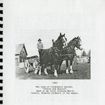 Image of 1925, Team of Clydesdale Horses Used at First Plowing Match