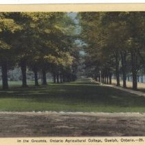 Image of Grounds of OAC c.1930