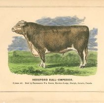 Image of Hereford Bull of F.W. Stone