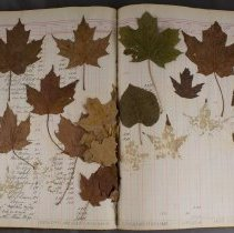 Image of Reference Book - C. H. Conery Furniture Company - Leaf Page
